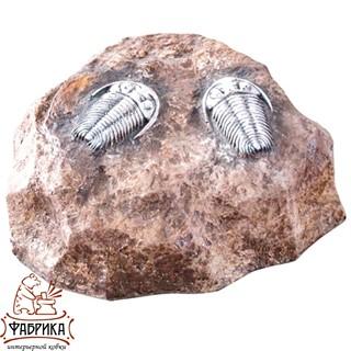Камень с трилобитами U07203