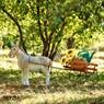 Садовый декор из полистоуна Тележка F07038