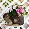 Садовая фигура кашпо для цветов