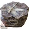 Камень со стрекозой